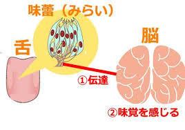 栄養不足によって起きる舌のトラブル | オーソモレキュラー ...